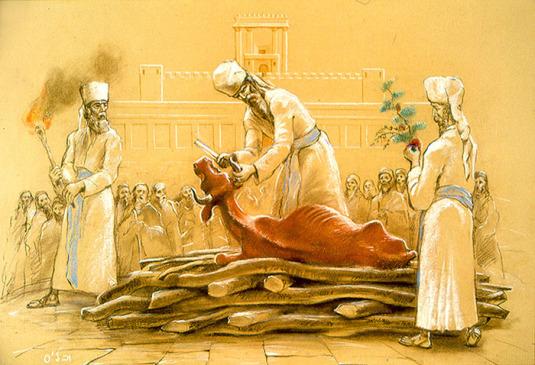 Kvigan på altaret